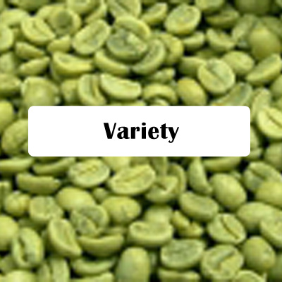 product-green-variety